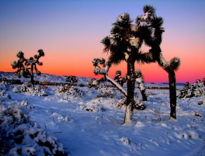 winter snow in southern california